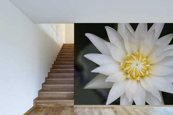 Papier peint original décor Fleur Lotus du Nil