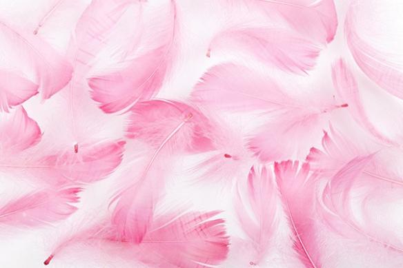 poster géant déco salon plumes roses