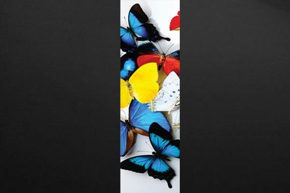 lé papier peint papillons