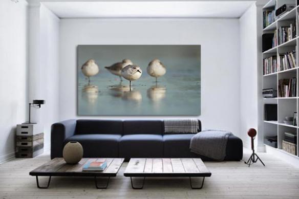 decoration salon tableau photo oiseaux