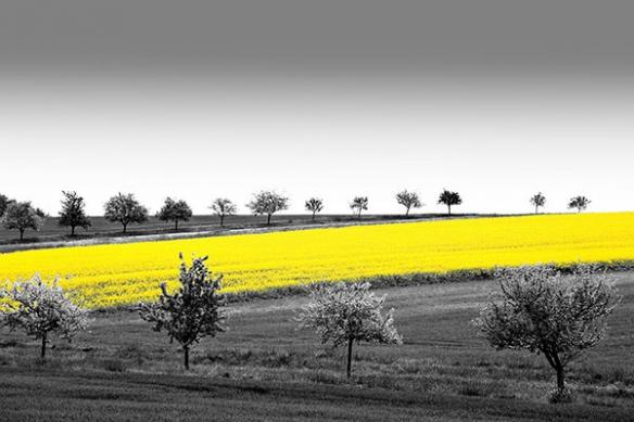 deco mur moderne paysage blé