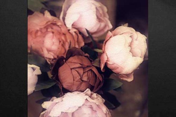 Rose Pivoine retro