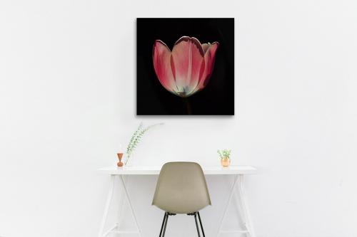 Tableau déco Tulipe Rose
