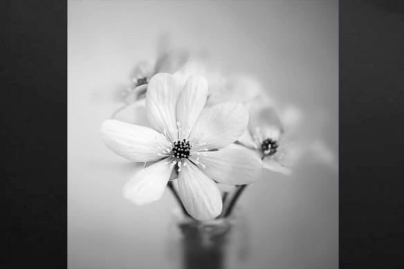 Toile déco Fleurs d'Intérieur