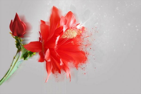 Tableau fleur amaryllis rouge by marion lechat izoa for Tableau noir blanc rouge