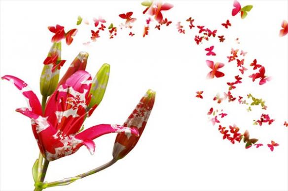 Tableau fleur papillon