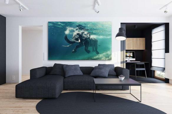 Tableau design éléphant marin