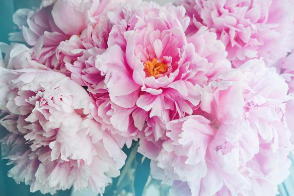 tableau fleur Déclaration