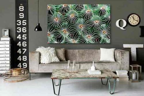 Tableau grand format Cactus macro