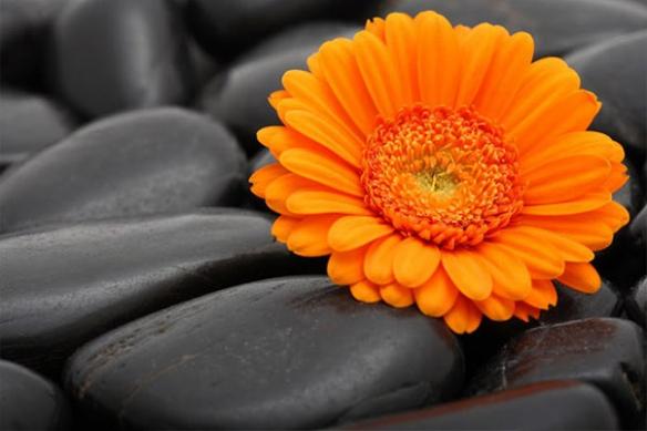 Tableau décoration design fleur galet orange