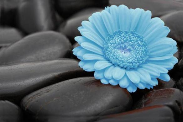 grand Tableau imprimé moderne Sweet Flower cyan