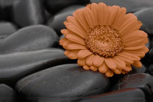 Tableau décoration intérieur marron
