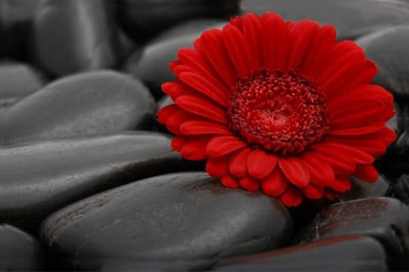 Tableau fleur romantique douce rouge
