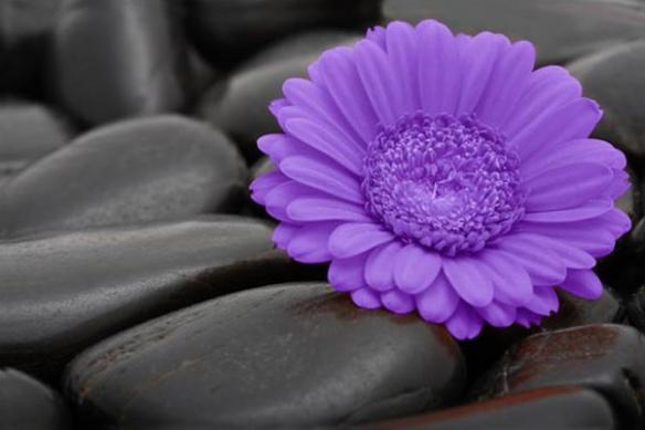 grand Tableau moderne Sweet Flower violet