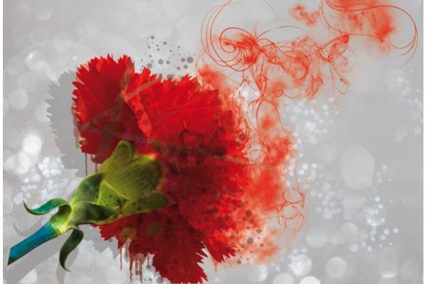 tableau fleur oeillet izoa