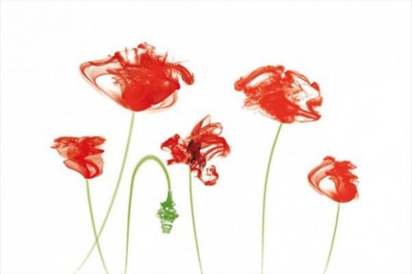 Fleurs rouges pavot fumé