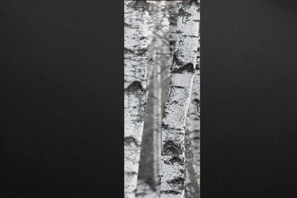 Papier peint zen Arbre blanc