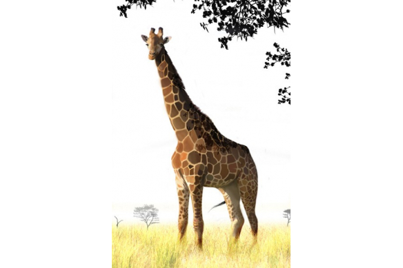 Tableau peinture Girafe