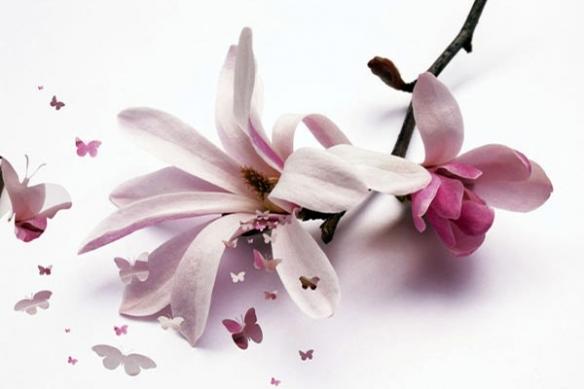 Papier Peint déco fleur de chrysalide
