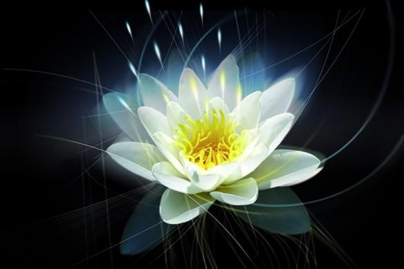 Nymphéa Lotus grand Tableau déco  mural