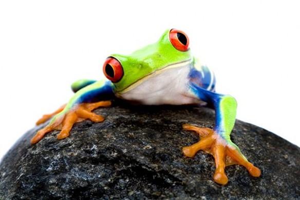 batracien deco mural design grenouille