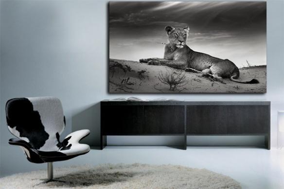 Tableau noir et blanc Lionne