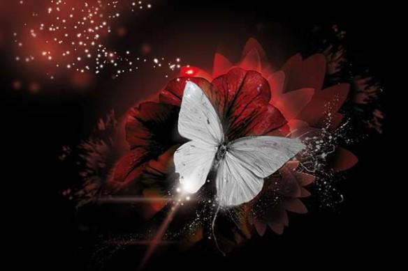 papillon de lumière  fleur rouge design