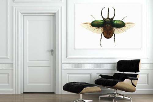 Tableau original coléoptère