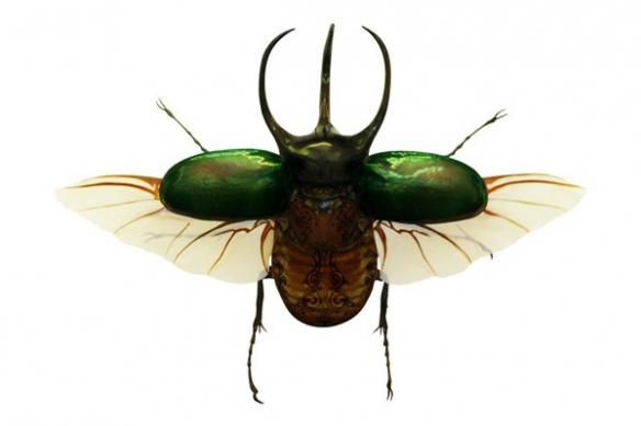 Tableau insecte coléoptère