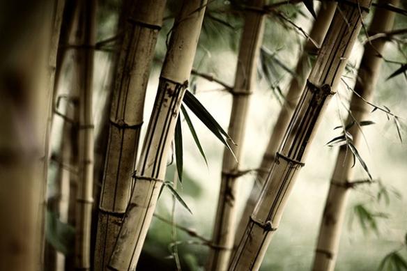 décoration chambre zen bambouseraie