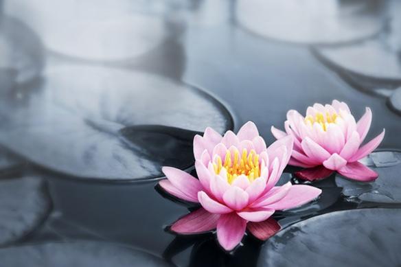 Lotus sacre rose tableau zen fleur