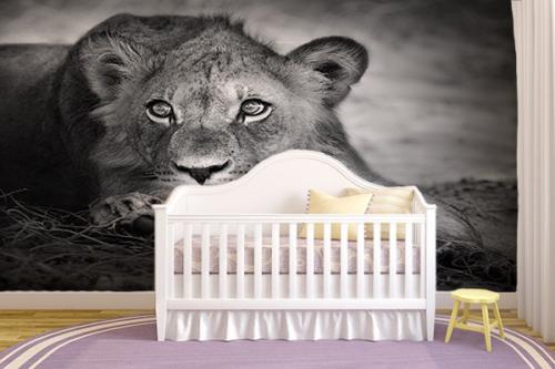 Papier Peint Deco Lionceau