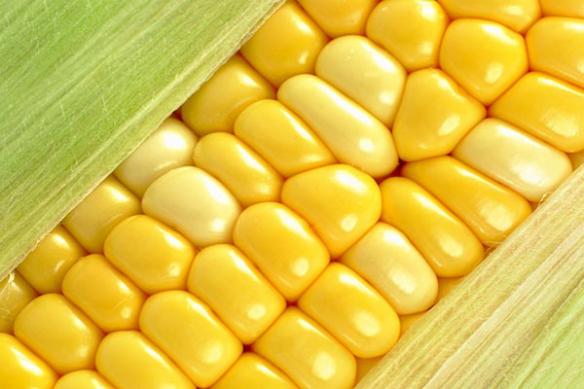 cuisne tableau épi de maïs