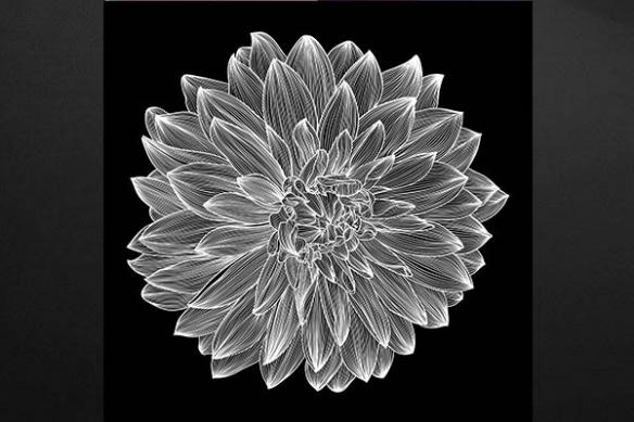 Dalhia noir et blanc déco design intérieur