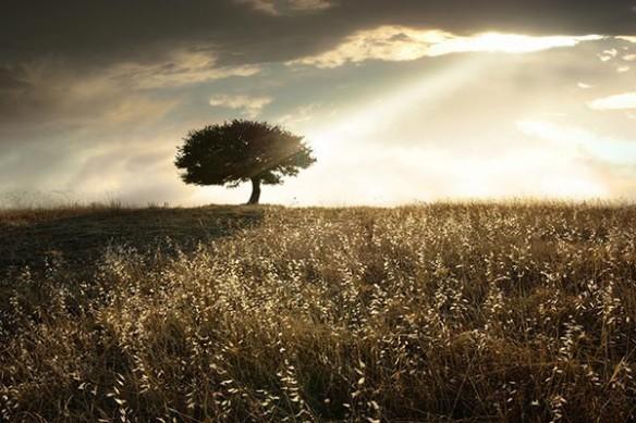 Rayon de Soleil sur champ de blé