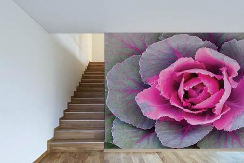 Papier peint mural Chou rose