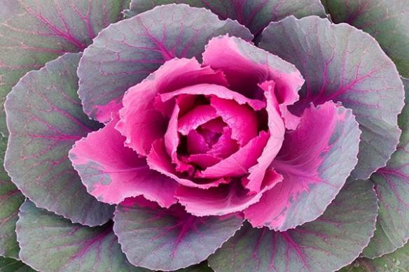 choux en fleur déco original