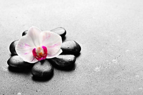 orchidée galet