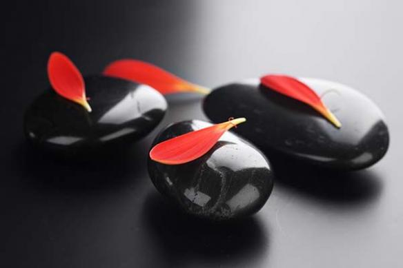 petales Cliona sur galet noir