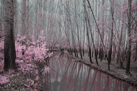 Tableau paysage nature foret