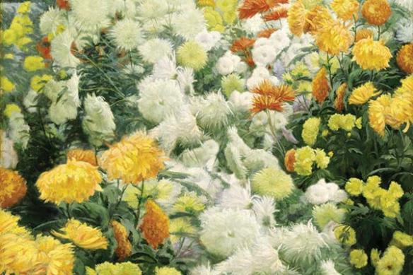 champ de chrysanthèmes jaunes