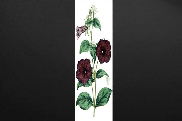 Papier peint d coration murale botanique izoa for Decoration murale papier