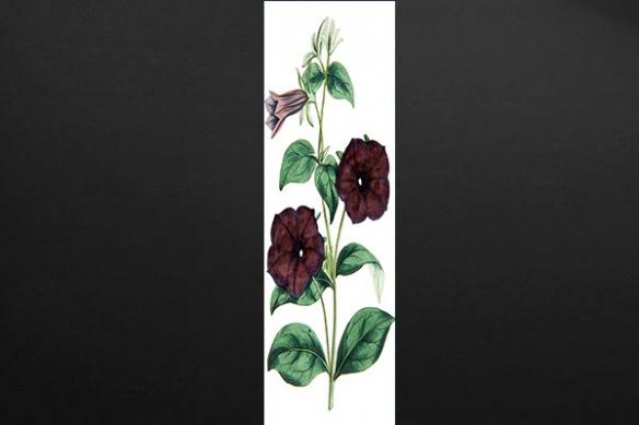 Papier peint décoration murale Botanique