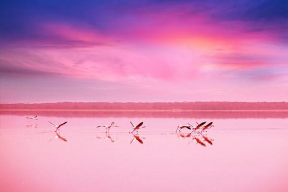 Lac Hiller pink lake australie