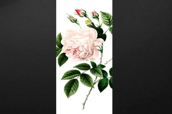 Sticker porte déco Watercolor Flower