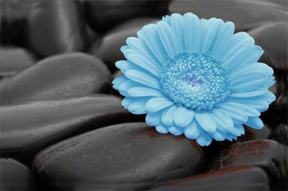 Papier Peint zen Marguerite bleu ciel
