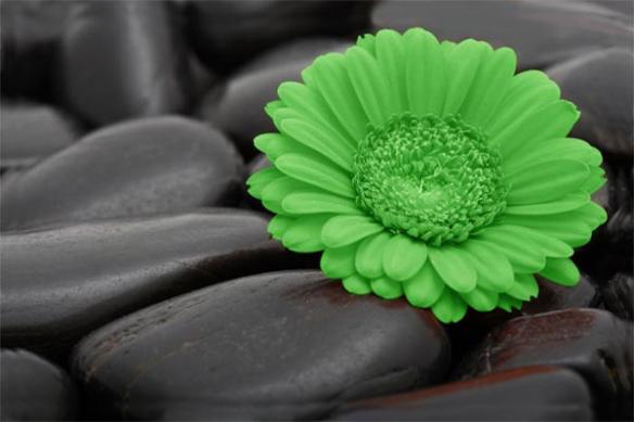 papier peint sticker  Marguerite vert