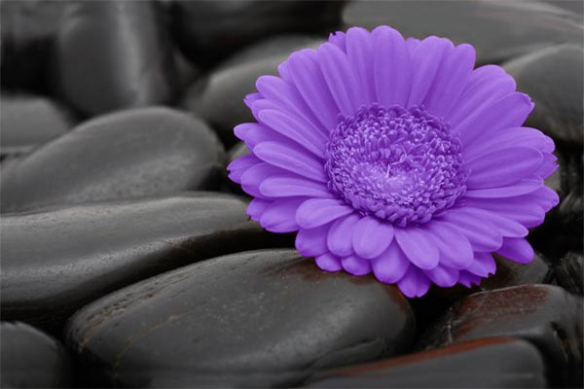 roche volcanique et Marguerite violet trompe oeil