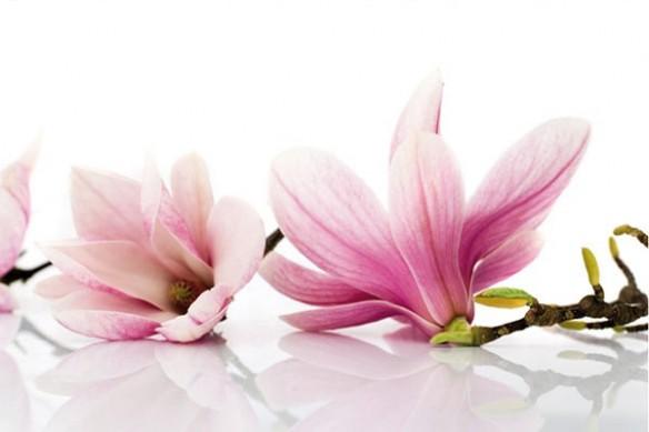 Papier peint Fleur Magnolia