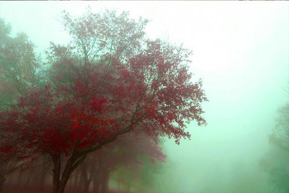 brouillard matinal arbre feuille rouge papier peint photo